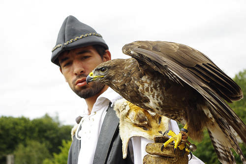 Hawk sitting on the gloved hand of a bird of prey expert at Puy du Fou theme park, France