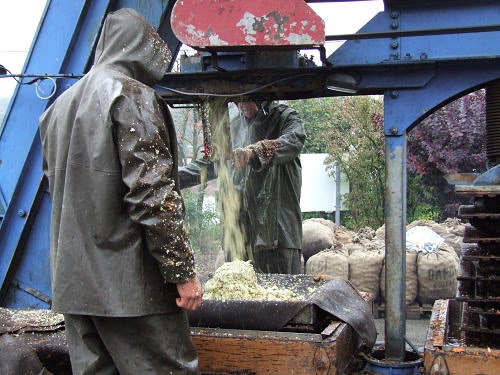 Making farmers unpasteurised cider