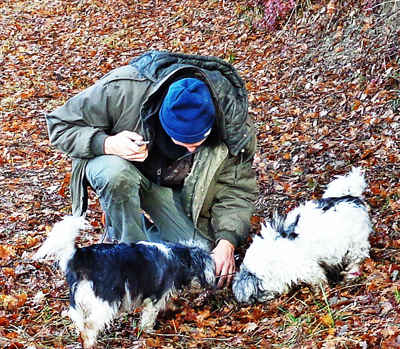 truffle hunting in france