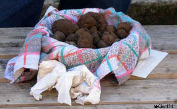 truffle market france