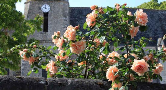 Chedigny roses
