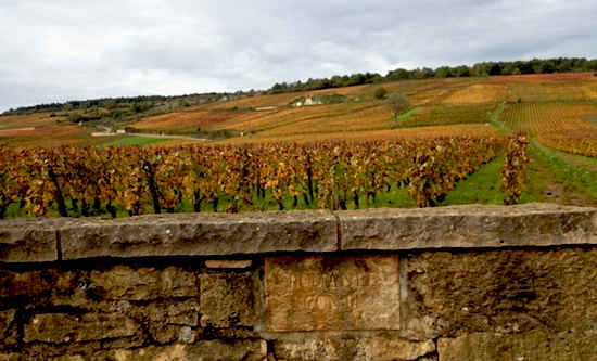 vineyards in autumn france