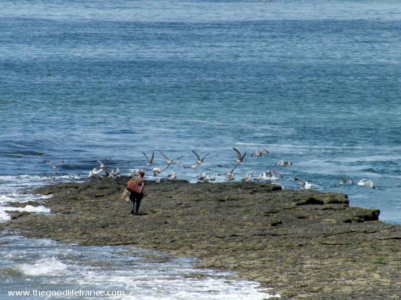 opal coast fisherman