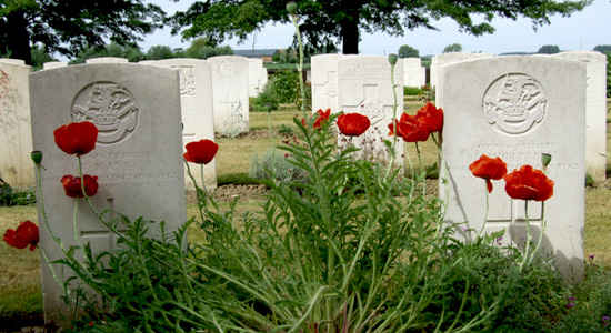 WWI grave stones with poppies
