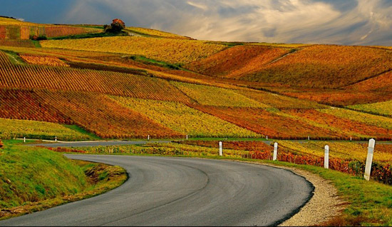 Vineyard in autumn in France
