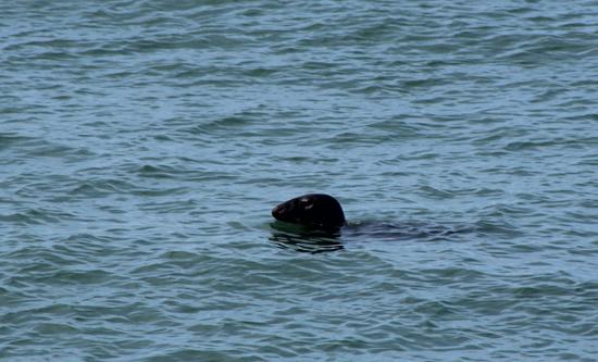 opal-coast-road-seal