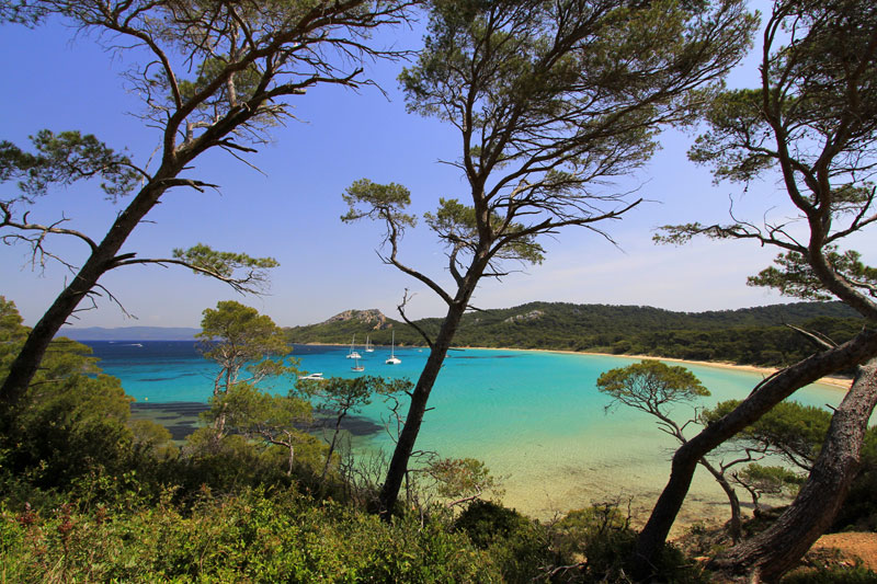 Turquoise waters lap a golden sandy beach lined with trees on the island of Porquerolles, France
