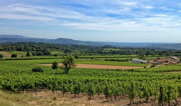 provence-vineyards