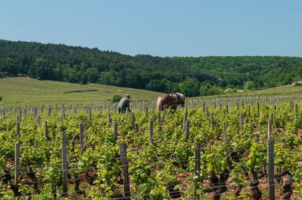 vineyards-of-Belle-France
