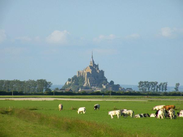 mont-saint-michel-with-cows