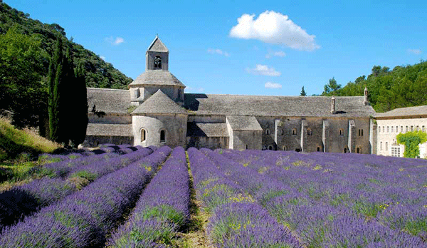 Lavender Fields France Map.Where To See Lavender In Provence The Good Life France