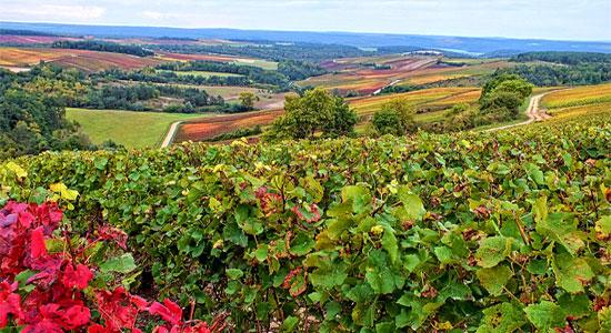 autumn-in-champagne-haut-marne