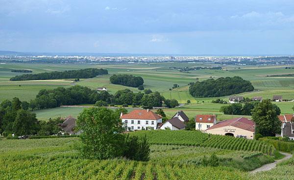 view-to-Reims-from-La-Montagne-de-Reims