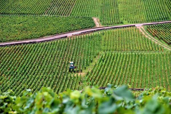 burgundy-vineyards