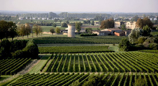 Cote-de-Bourg-Vineyards-Bourg-Tourist-Bureau