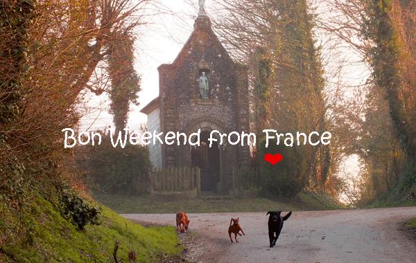 bon-weekend-dogs