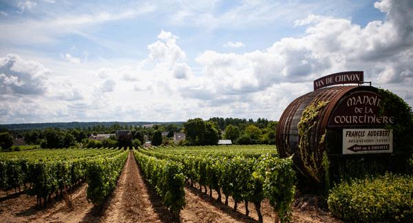 Loire Valley Vineyards in autumn