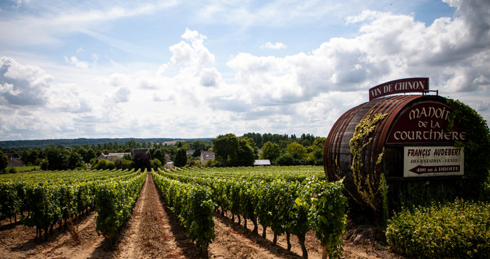 An enormous wine barrel, bigger than a mini bus in a leafy green vineyard under a blue sky with soft clouds