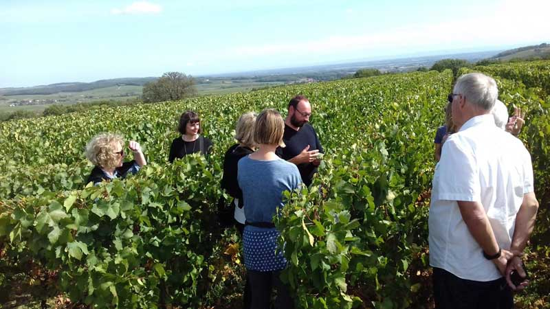 People in a vineyard learning about the vines and the wines in Burgundy