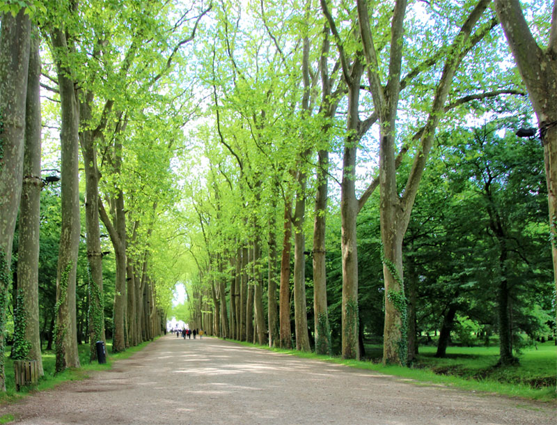 Grand, wide avenue of loose stones lined with tall majestic trees leading to a castle