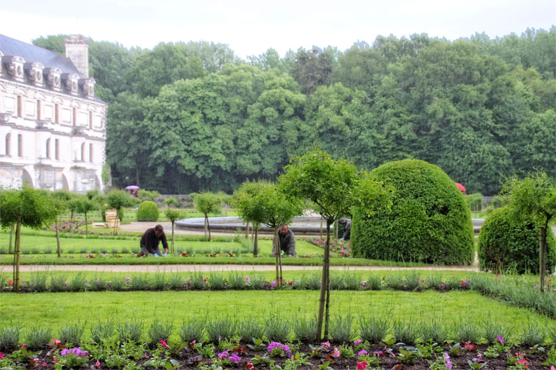 man weeding flower beds in a formal garden, a castle in the background, rain pouring