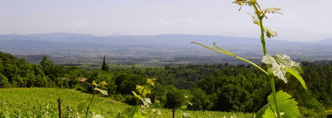 The wines and terroir of Aude, southwest France