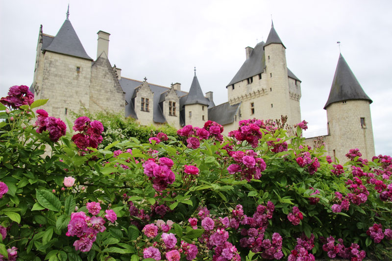 Roses fill a garden in front of a fairy-tale looking castle of white stone with very pointed towers at Chateau de Rivau