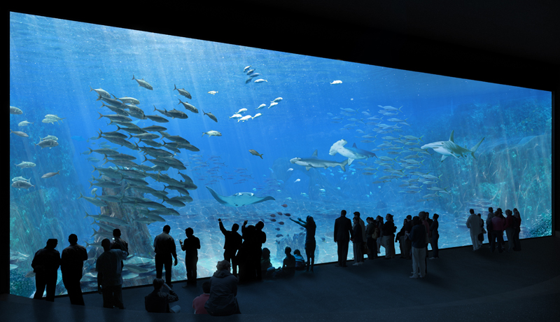 nausicaa boulogne sur mer one of the largest aquariums in the