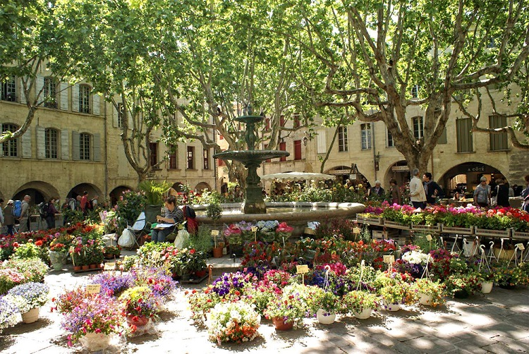 Flower market in Uzes Provence, flowers laid out under plane trees, fountain tinkling in background
