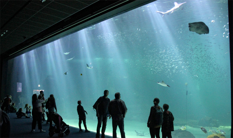 One of the biggest fish tanks in the world at Nausicaa, Boulogne-sur-Mer