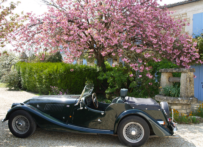 Morgan car under a blooming cherry tree
