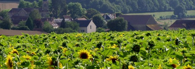 Animal life in rural southern France