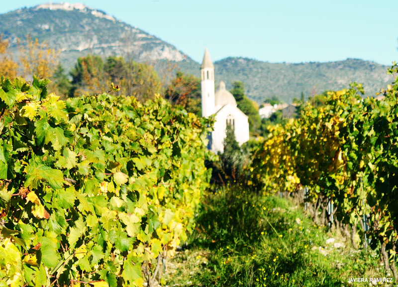 Vibrant green vines with a hill in the background and a tiny white chapel
