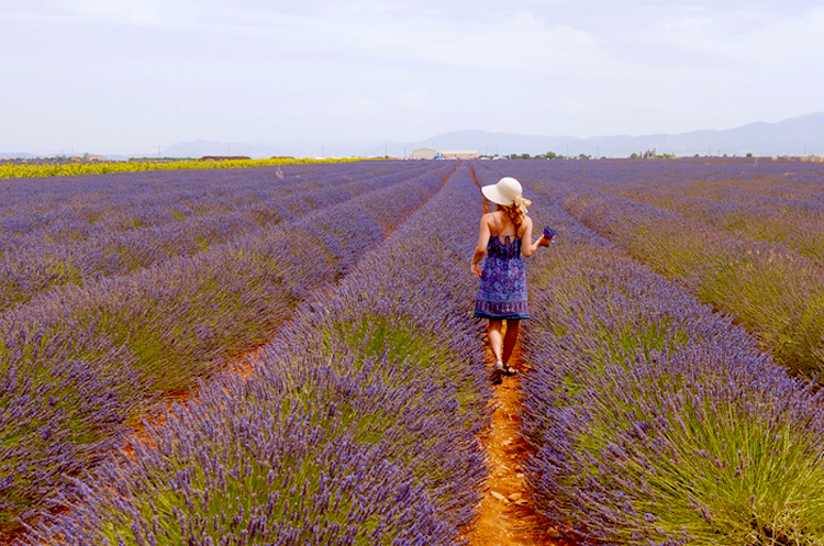 Woman with sun hat and sun dress stands in a field of lavender