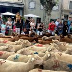 The Transhumance of Provence