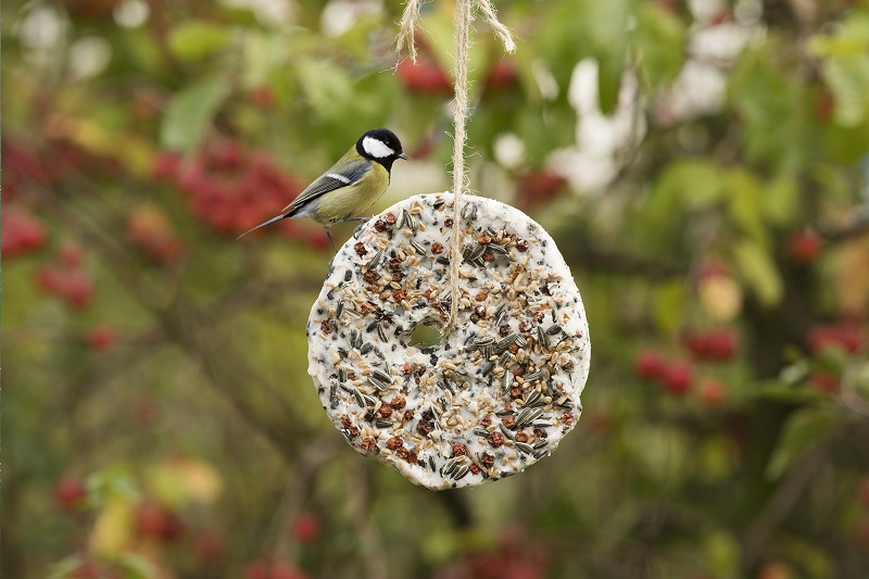 A blue tit feeds from a bird ball in a garden in winter