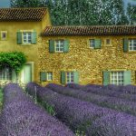 The best Lavender Tour of Provence