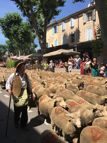 Shepherd in traditional costume in Provence, herds sheep down a road in a town in summer