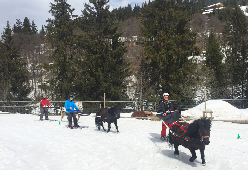 Small horses pulling people on skis on a snowy mountain path in Meribel, France