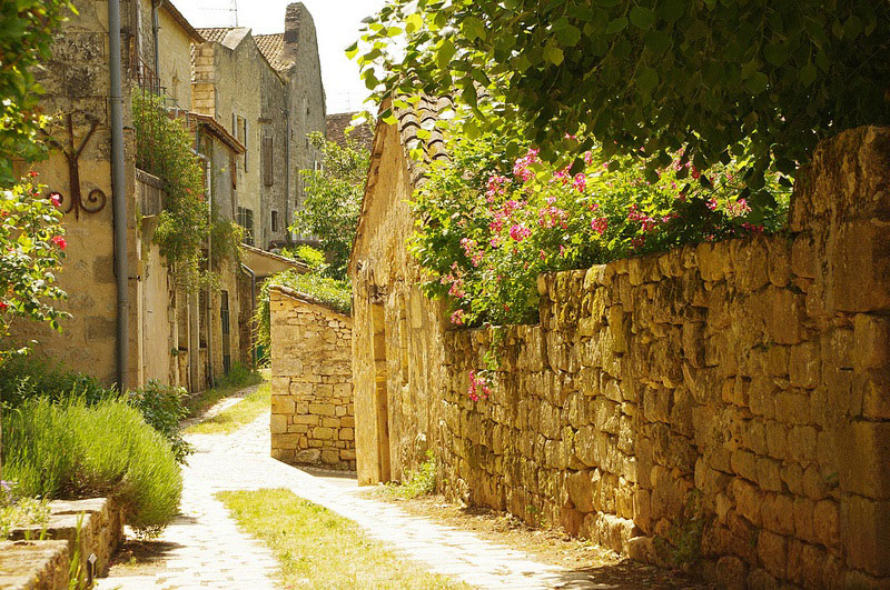 Stone walls over which pink blooming roses hang on a narrow winding street in Bergerac, France