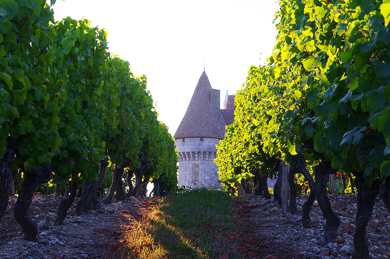 A stone tower with a tall pointed top, the Chateau of Monbazillac, Bergerac, surrounded by leafy vines