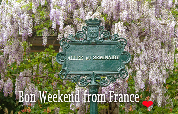 Wisteria flowering in spring in France