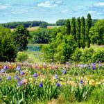Visit an exquisite iris farm in the Lot | Iriseraie de Papon