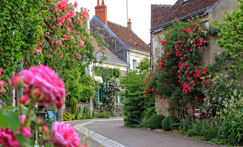 A cobbled street lined with small and pretty houses where every garden is full of roses blooming