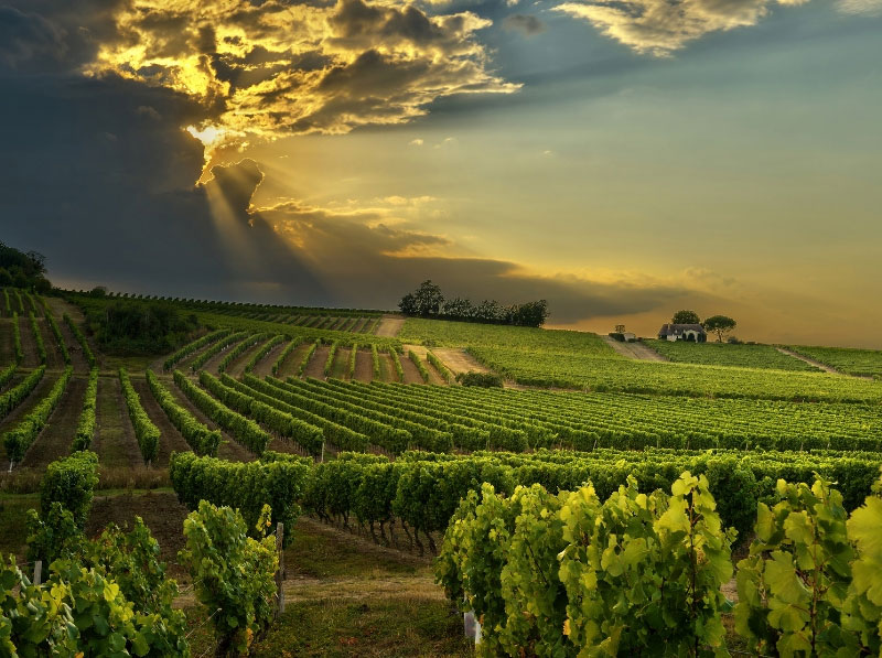 Vineyards in Dordogne, lit by a beam of sunlight breaking through clouds
