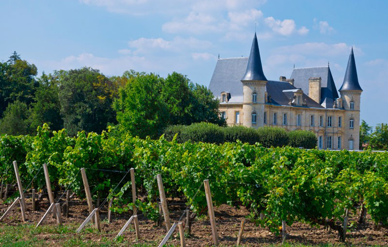 Lush green vineyard with a beautiful castle in the background in Bordeaux