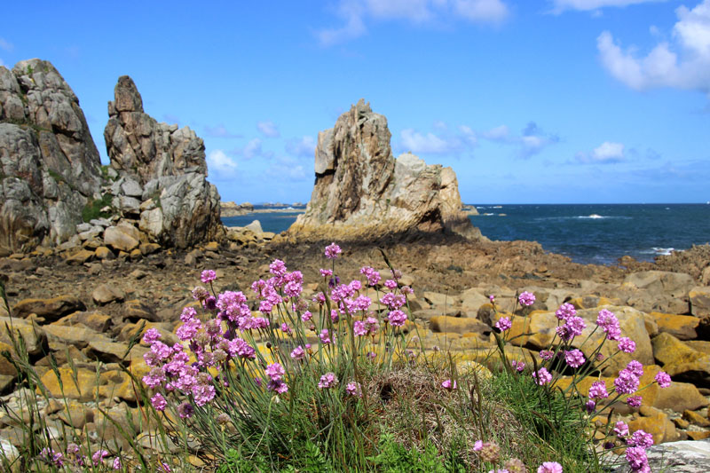 Huge granite blocks pepper the coastline of the Pink Granite coast of Brittany, wild flowers and deep blue sea
