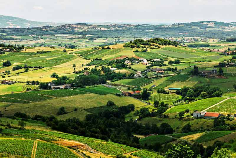 Vineyards like a patchwork quilt, every shade of green in Beaujolais, Burgundy