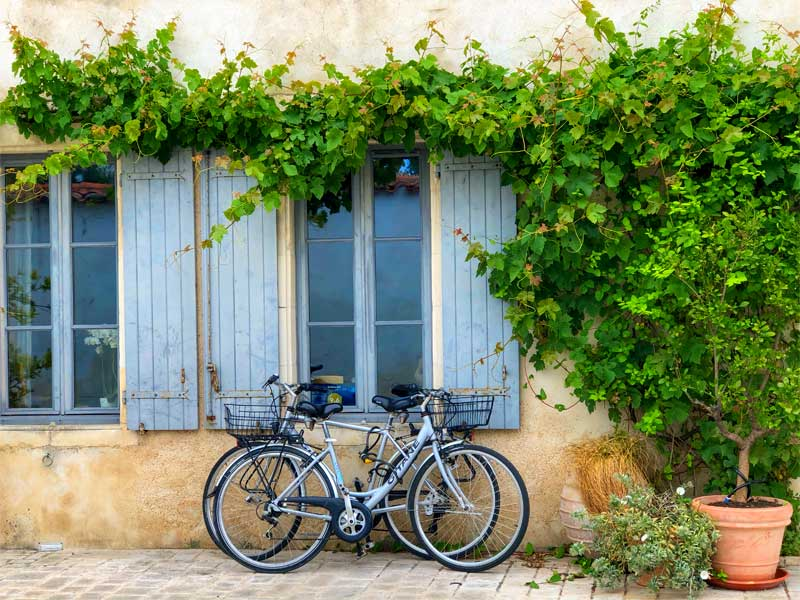 two bikes resting against a wall with vines growing over it, Ile de Re, France