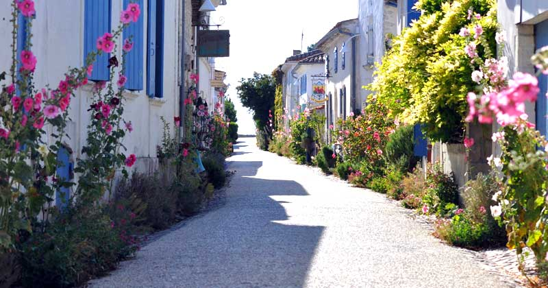 Narrow cobbled street, white stone houses with blue shutters and hollyhock flowers growing in the street